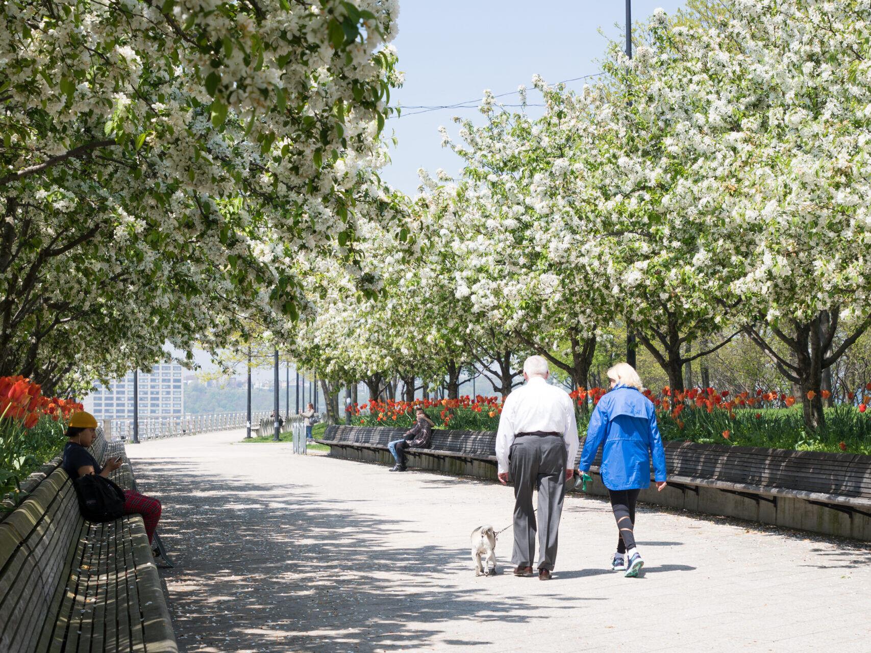 pier 64 couple walking pathway crab apples