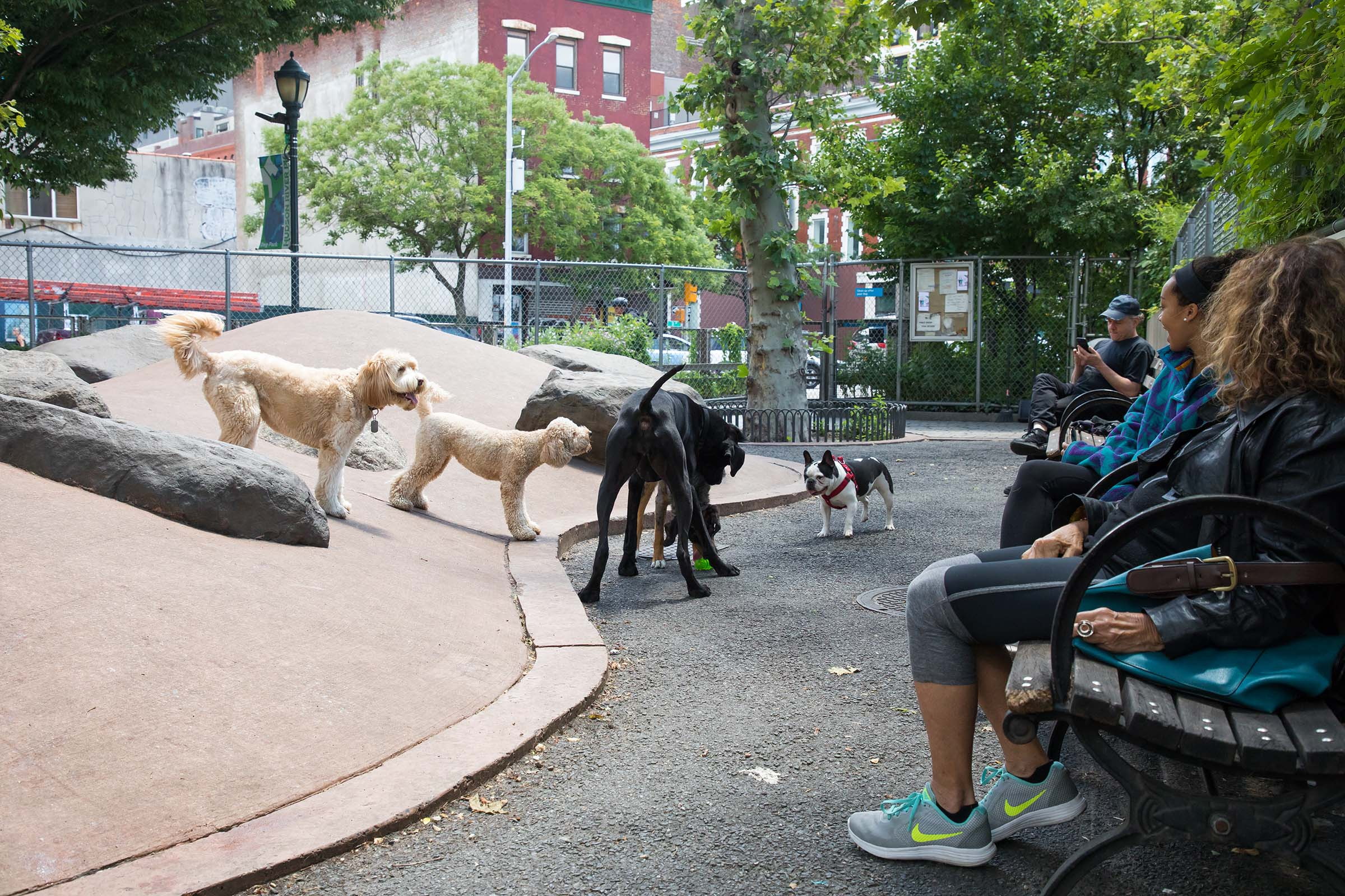 Four dogs gather around in the Chelsea Waterside Dog Park as their owners look on