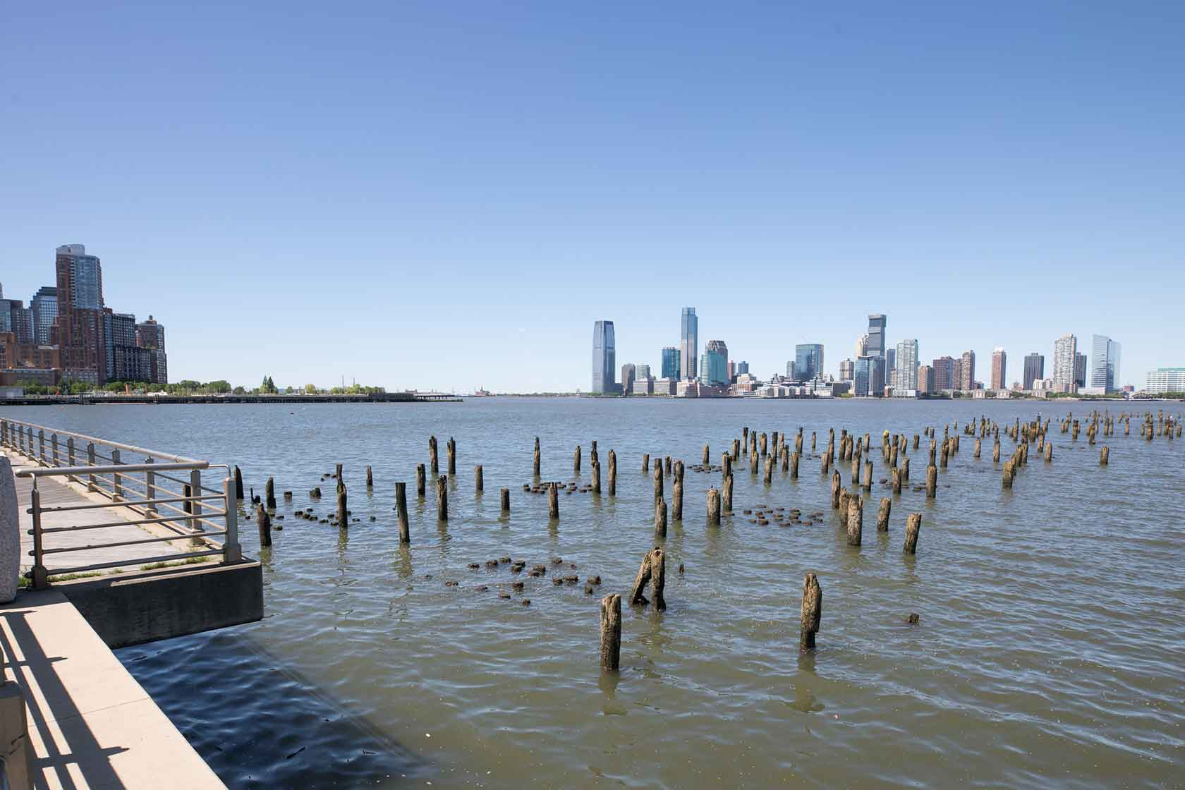 Piles where oysters live near Pier 34