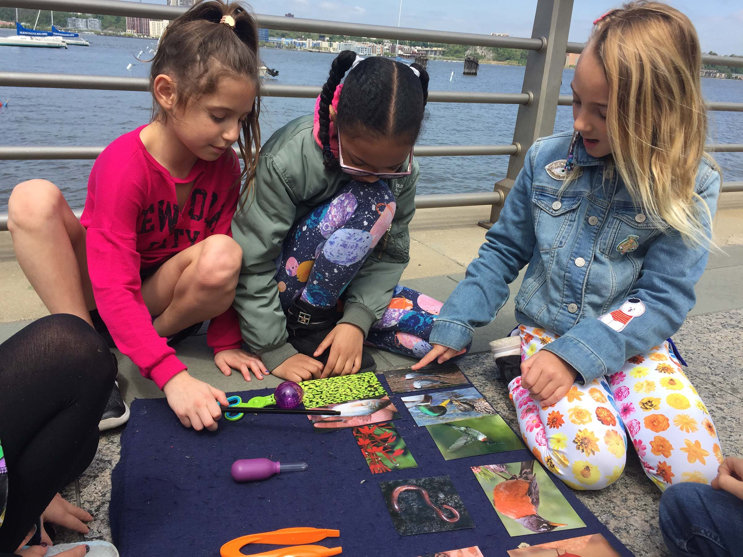 A group of students look at various birds found in Hudson River Park