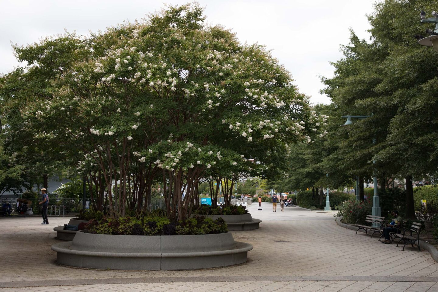 Luscious potted trees provide shade for Park Visitors