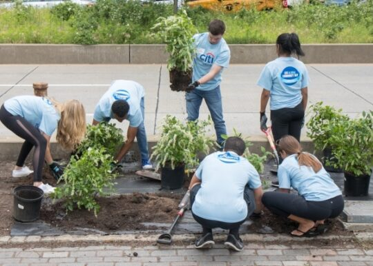Volunteers from Citi help plant various plants across Hudson River Park