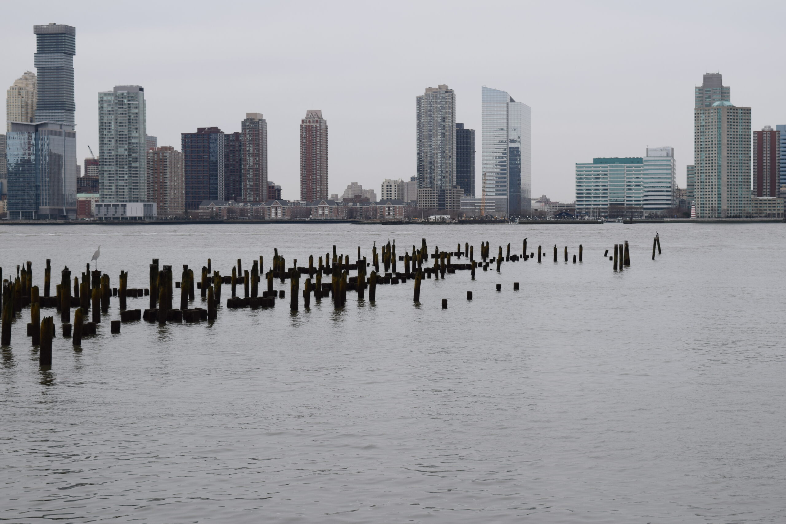 The pile field on the Hudson River is one of the places Hudson River Park grows oysters