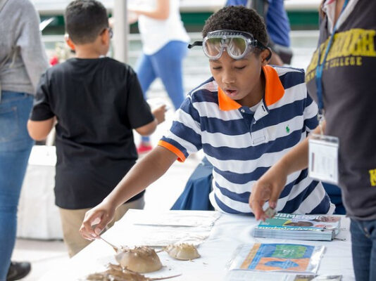 An excited child learns and touches horseshoe crabs at Submerge in Hudson River Park
