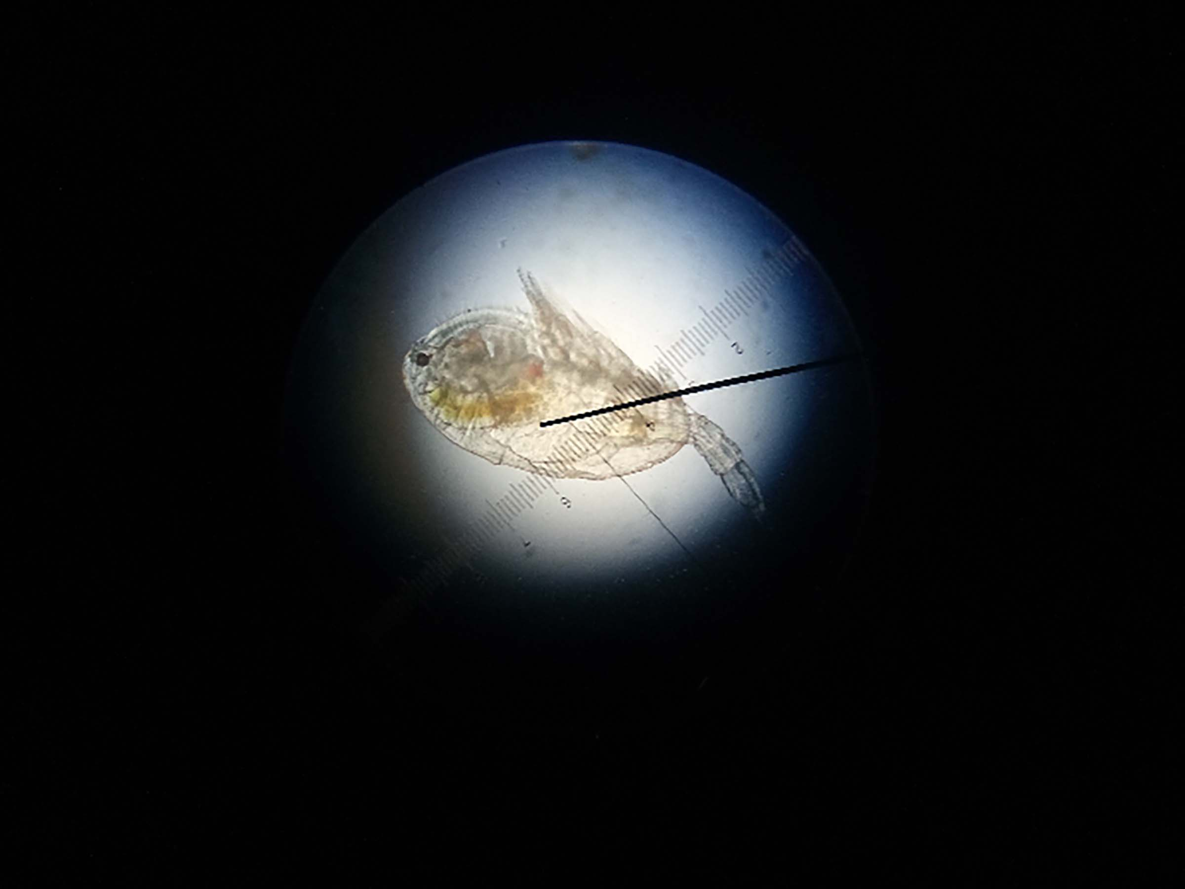 The end of the microscope showing small plankton matter