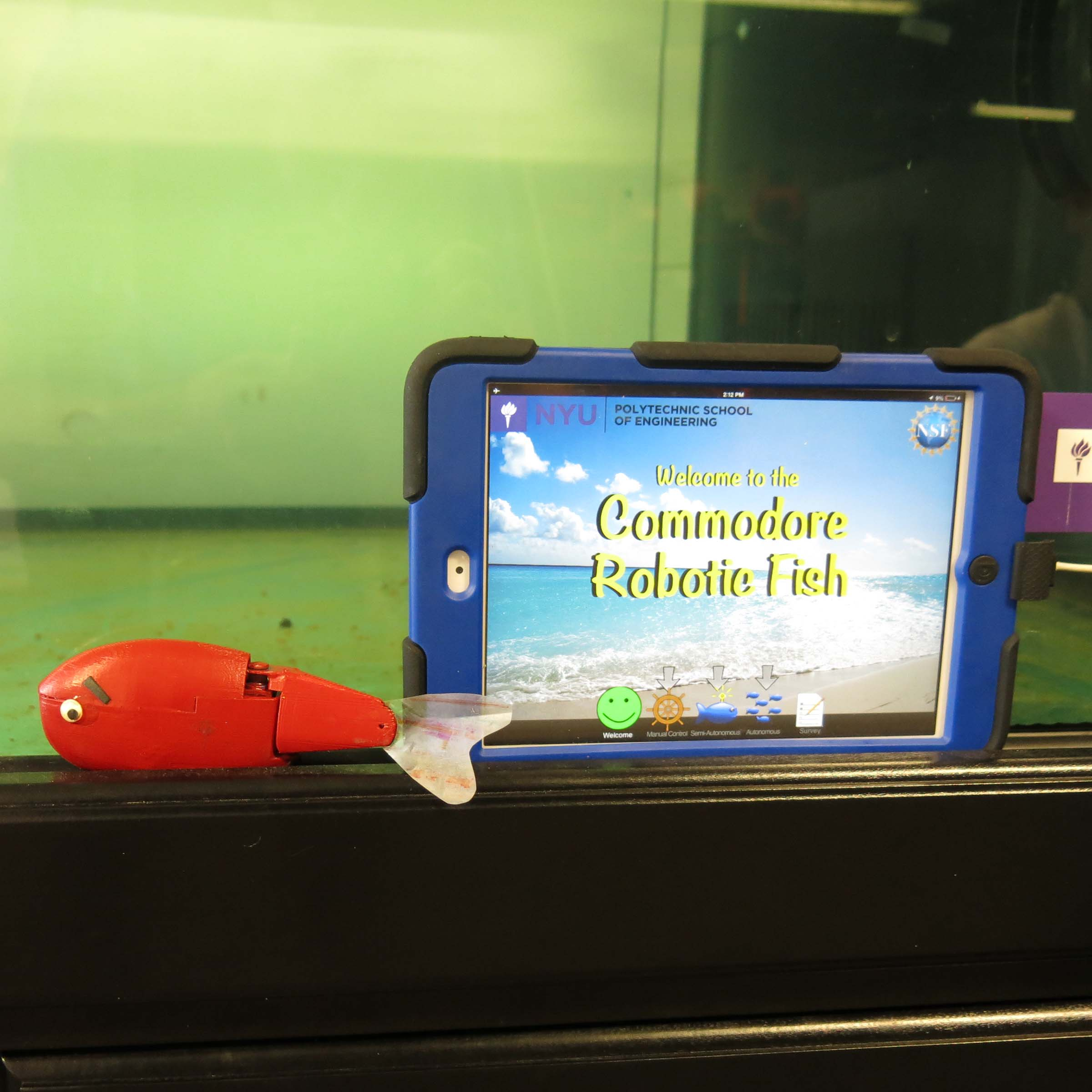 An ipad with NYU's logo stating students are about to watch a video on Commodore Robotic Fish