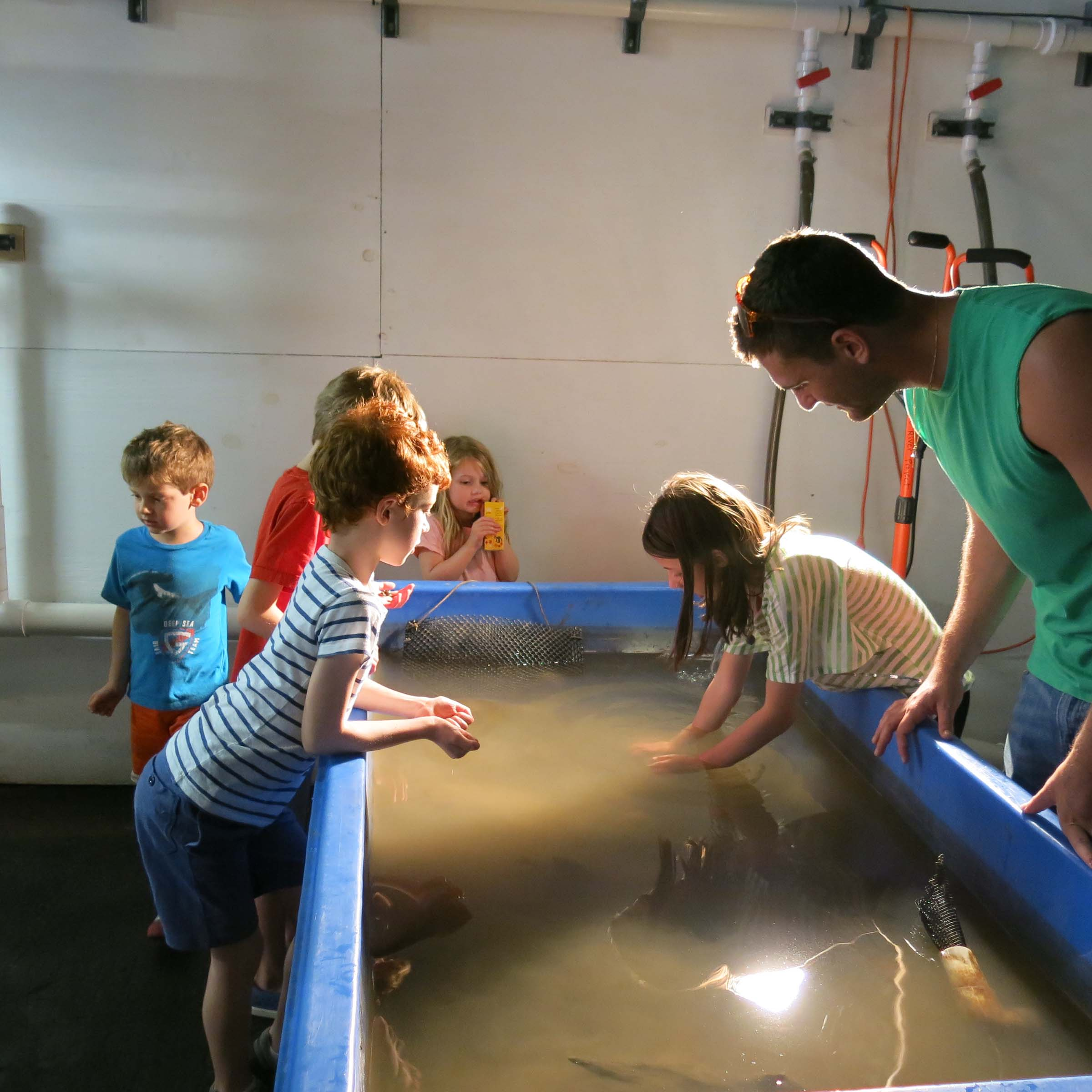 Students reach into the fish tanks at the Wetlab