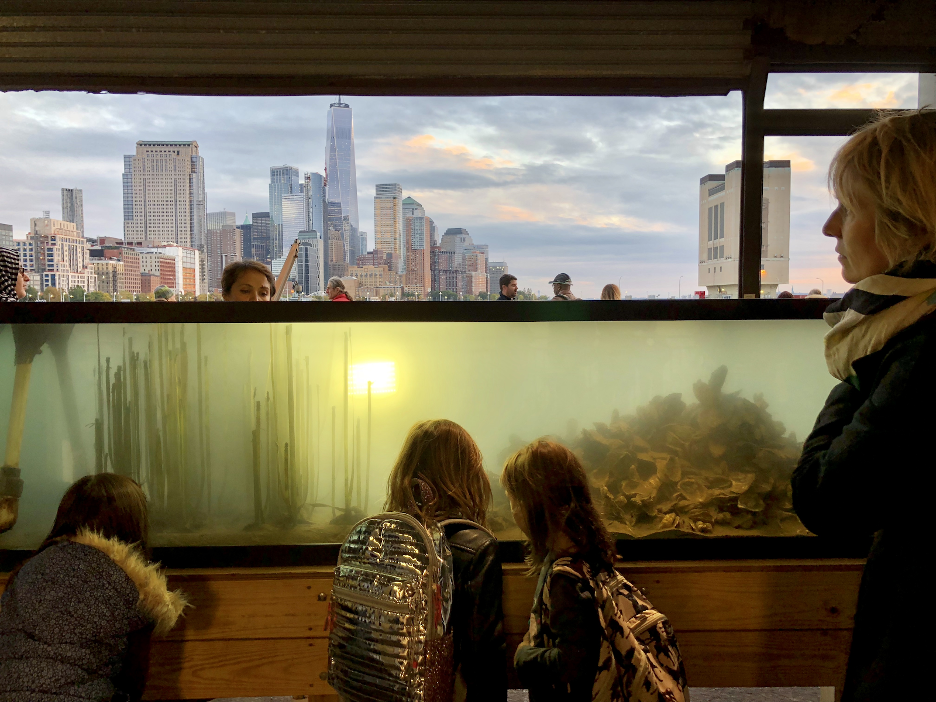 A group of Park visitors enjoy looking at the fish in the wetlab aquarium