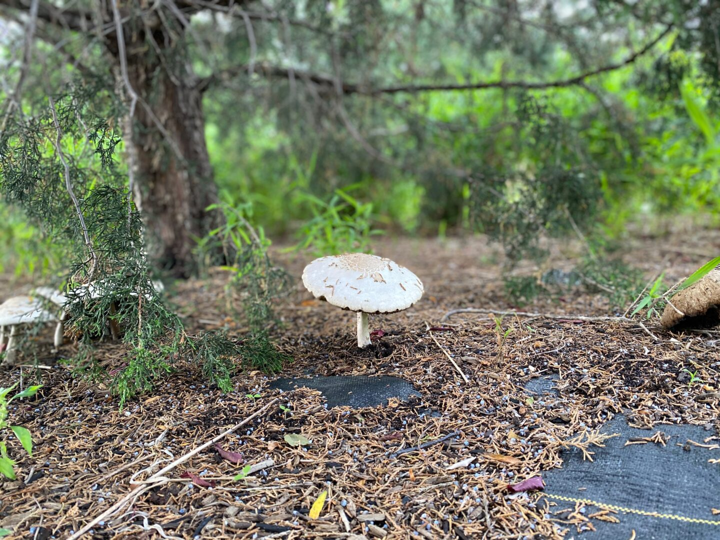 A large mushroom sits along the path in the Park
