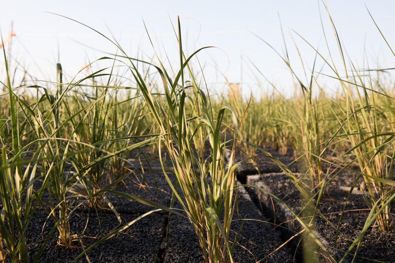 grass at pier 26 tide deck
