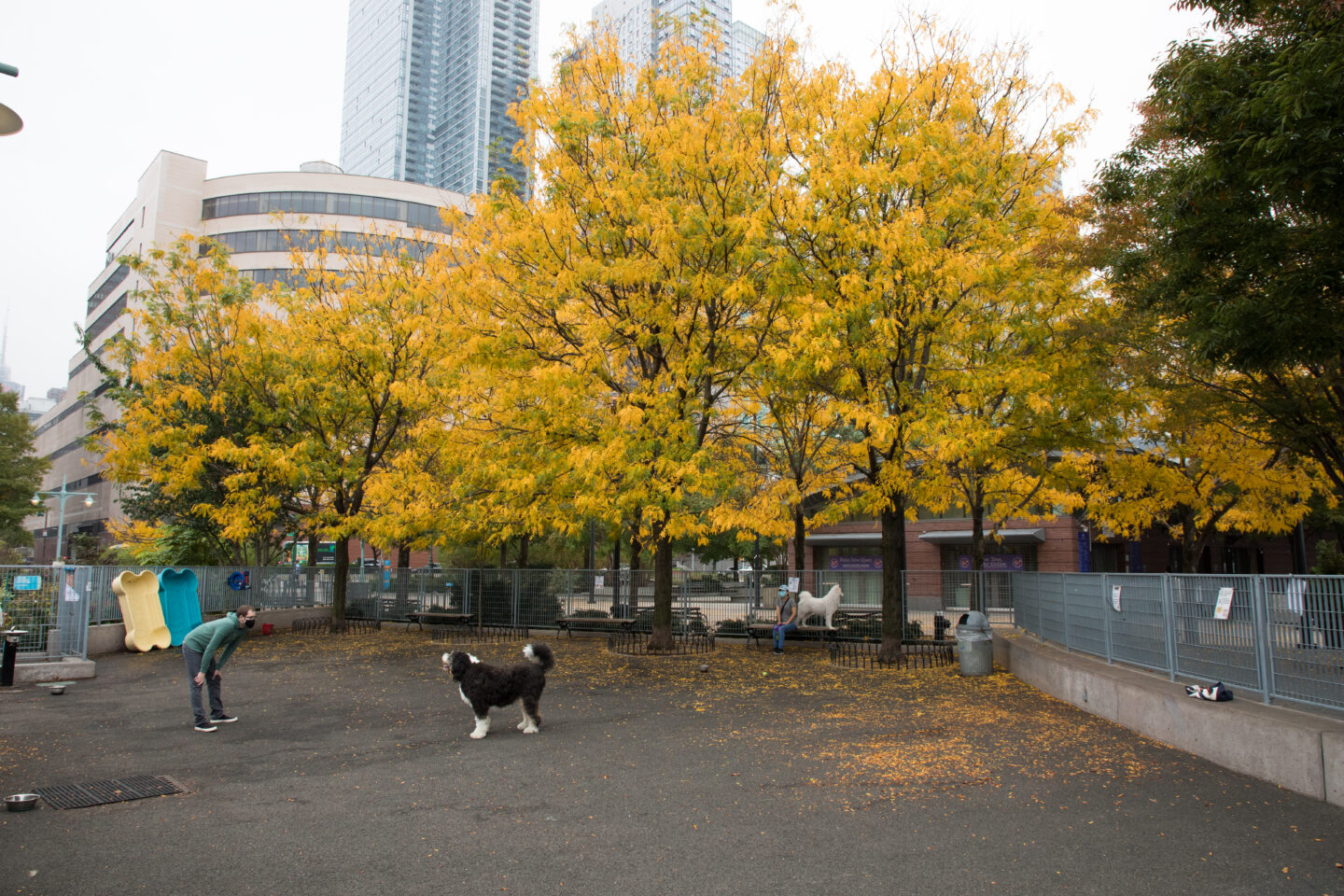 Pier 84 dog run yellow fall leaves