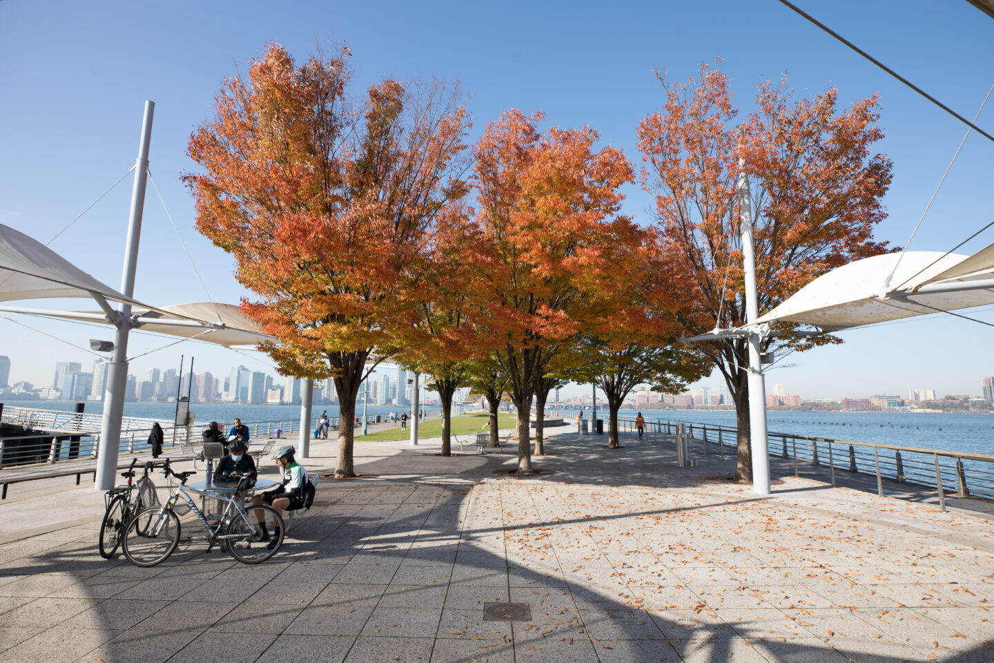 Pier 45 trees fall foliage 2020