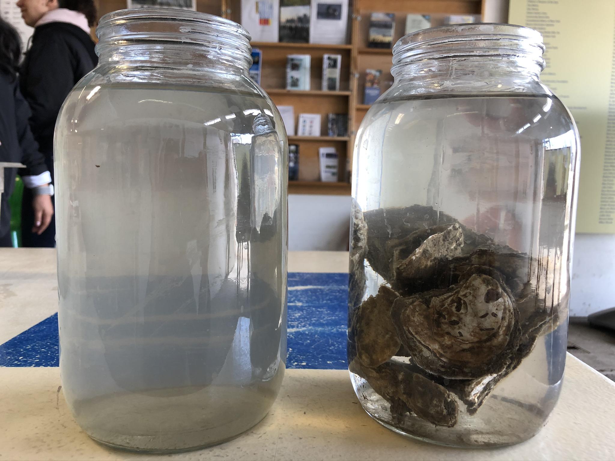 oyster in jar