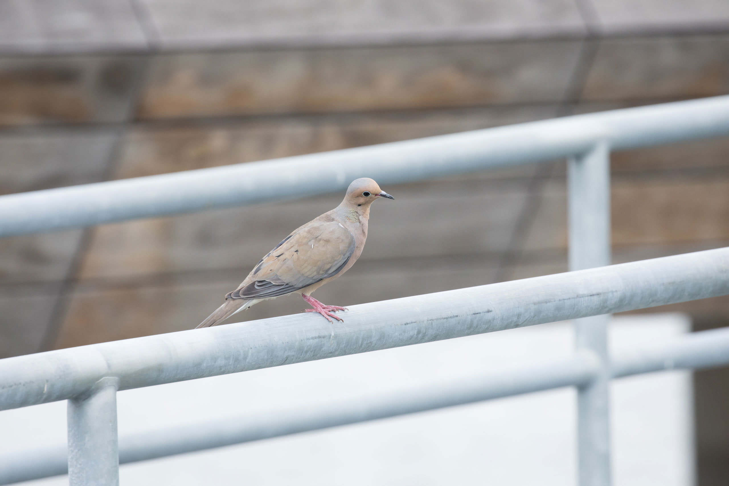 Bird perched on railings of the HRPK Pier 26 Tide Deck in Hudson River Park