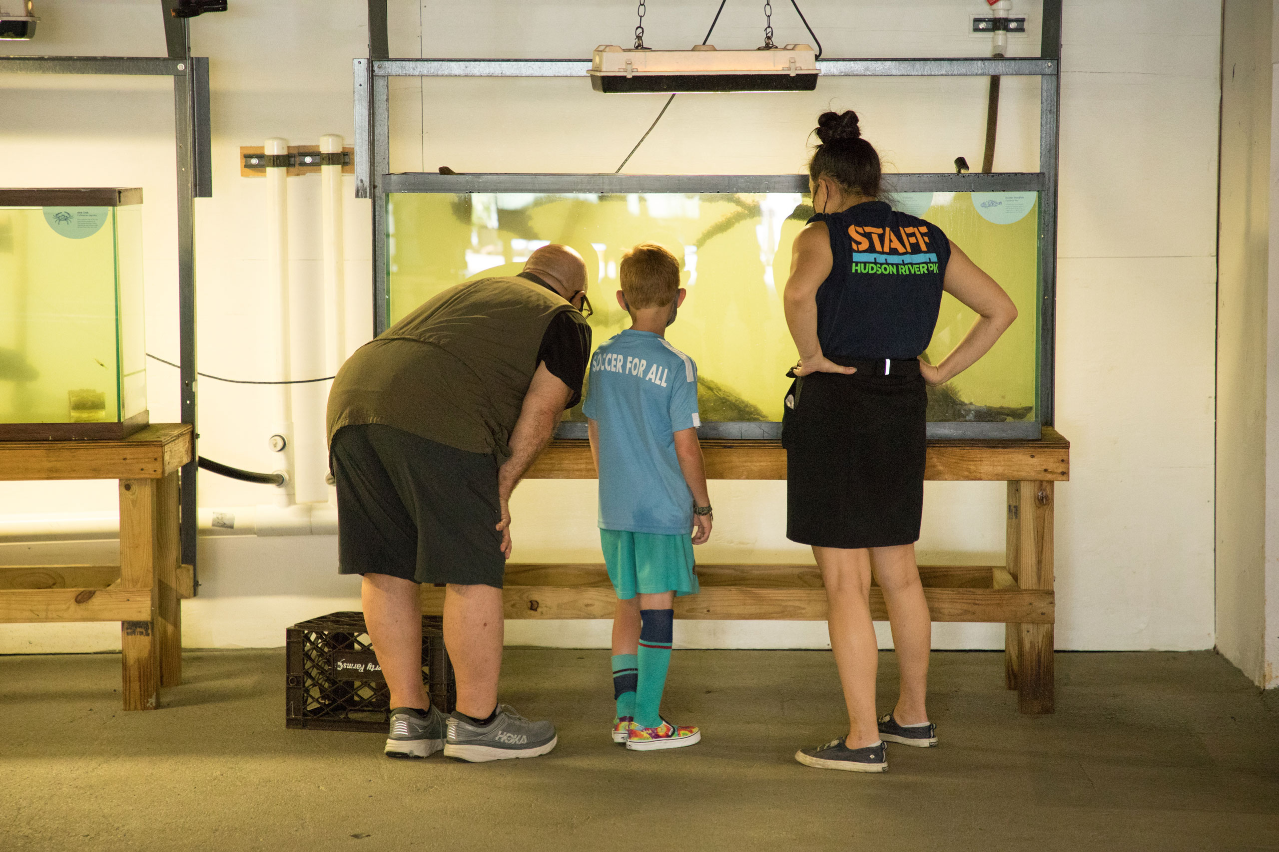 River Project staff looks on as man and son examine the wildlife in the Wetlab at Hudson River Park SUBMERGE